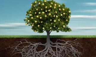 Você não é o primeiro da fila… Ou não existem galhos fortes sem raízes profundas.